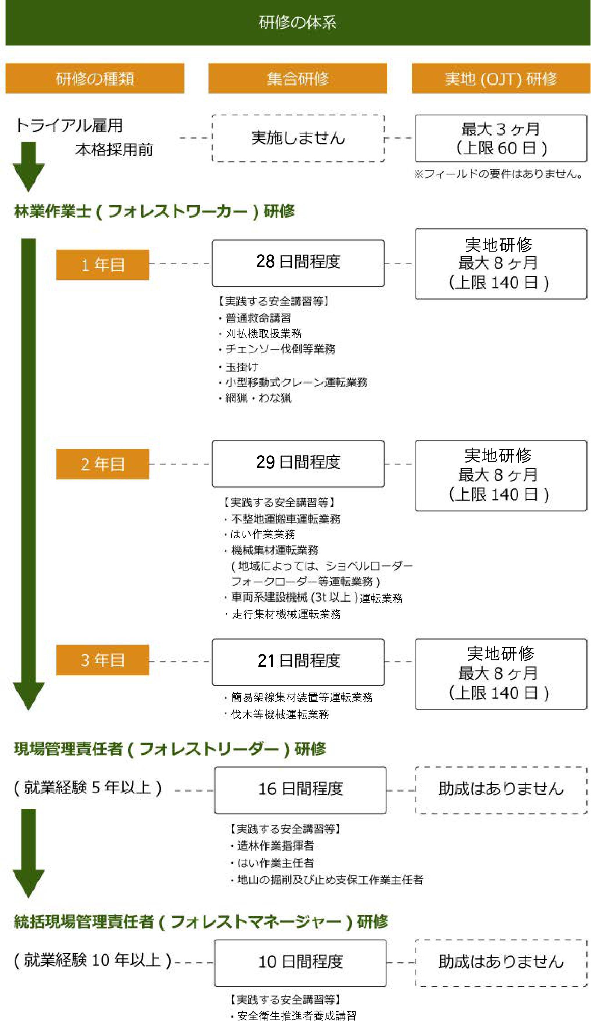 緑研修体系.jpg